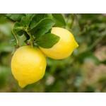 Composta biologica di Limone