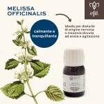 Melissa officinalis